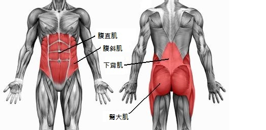 原圖出處:http://extremebballskills.com/core-muscle-exercises/